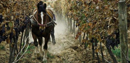 Bio a organické vína