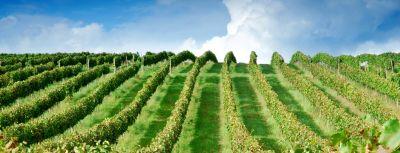Rozhovor s vinárstvom Chateau Modra